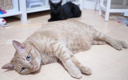 だらだらりん猫 しぇるろった編。_a0143140_22345314.jpg
