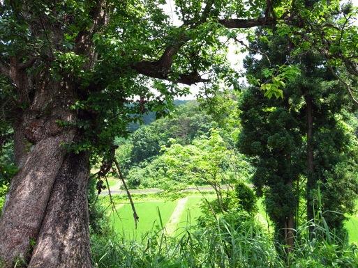 田舎に行ってました。_d0057843_20364310.jpg