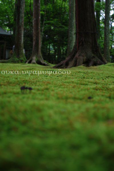 京都・夏・大原の里_a0157263_233660.jpg