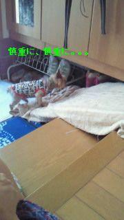 f0192863_145450.jpg