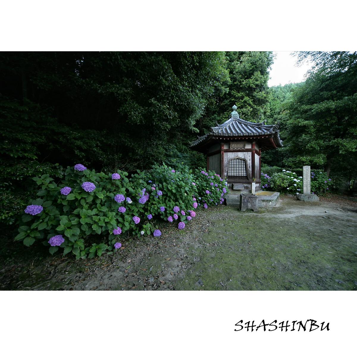 紫陽花 2011  <矢田寺>_f0021869_237377.jpg