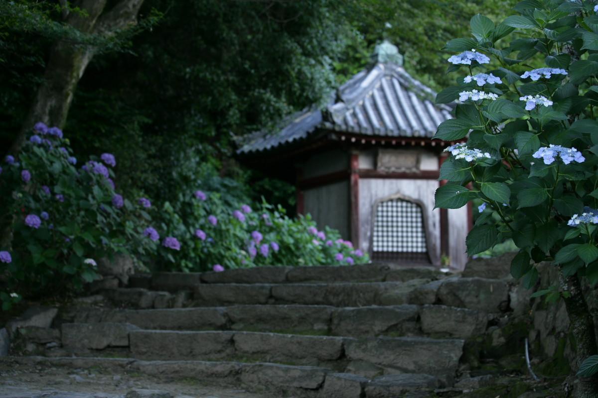 紫陽花 2011  <矢田寺>_f0021869_2385511.jpg