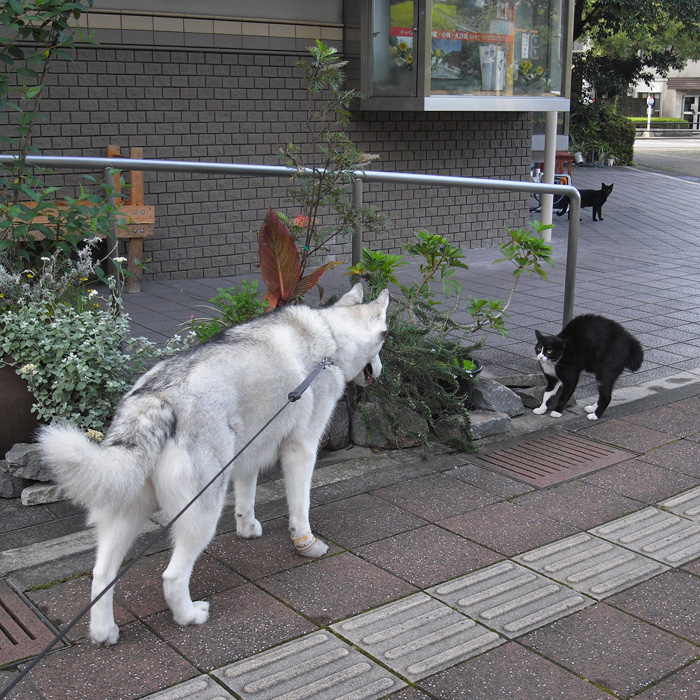 夏のお姫さま by GX100_c0049299_14105929.jpg