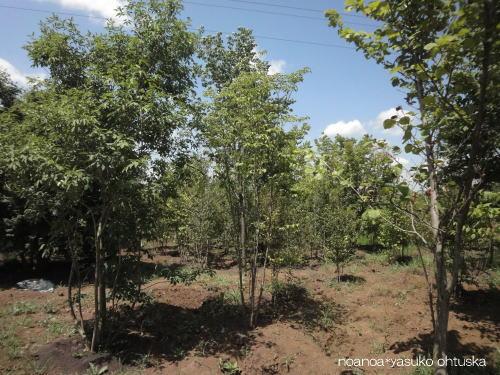 樹を選びに所沢へ_f0039406_21162086.jpg