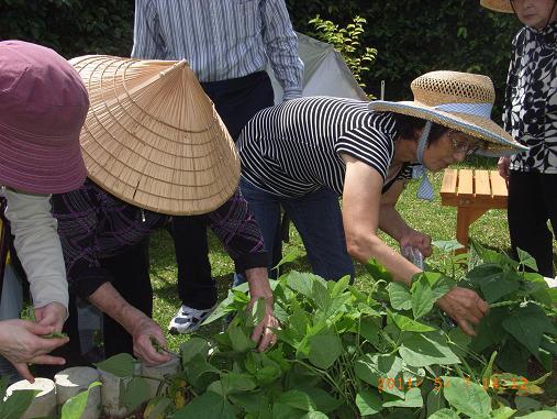 トウモロコシ&インゲン収穫しました~♡_d0163307_1154986.jpg