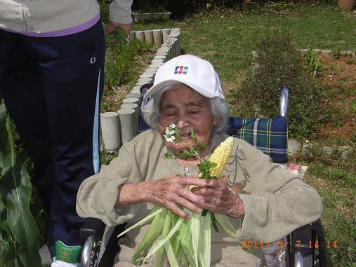 トウモロコシ&インゲン収穫しました~♡_d0163307_1174535.jpg