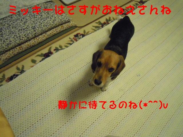 c0166622_1124140.jpg