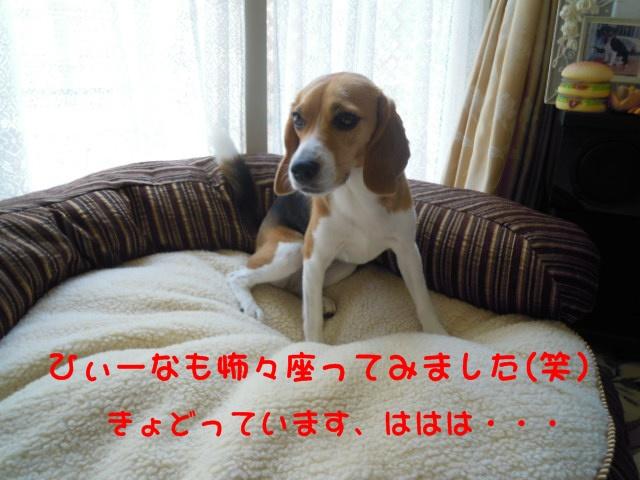 c0166622_114217.jpg