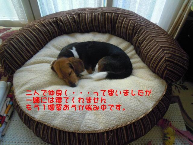 c0166622_115243.jpg