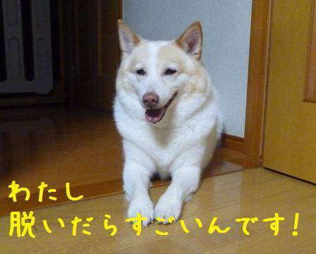 b0138430_2031173.jpg