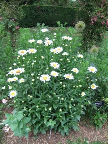 Brooklyn Botanic Garden_c0064534_13551590.jpg