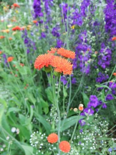 Brooklyn Botanic Garden_c0064534_13552717.jpg