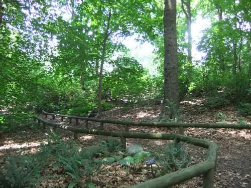 Brooklyn Botanic Garden_c0064534_13594351.jpg