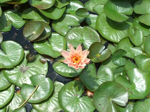 Brooklyn Botanic Garden_c0064534_1421952.jpg