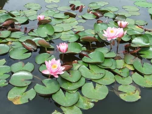 Brooklyn Botanic Garden_c0064534_1423143.jpg