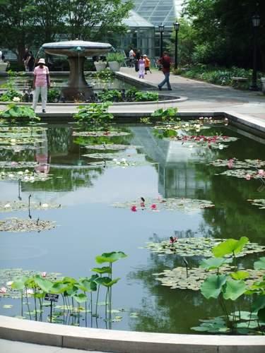 Brooklyn Botanic Garden_c0064534_1424564.jpg