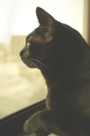 雨あがり猫 のぇる編。_a0143140_21462584.jpg