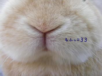 b0129140_15183796.jpg