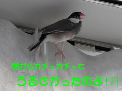 b0158061_1956035.jpg
