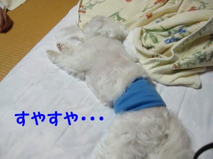 b0193480_1617011.jpg