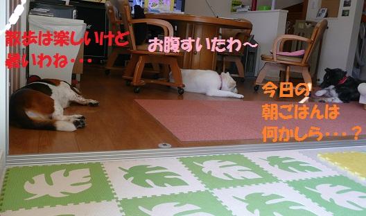 f0121712_9284114.jpg