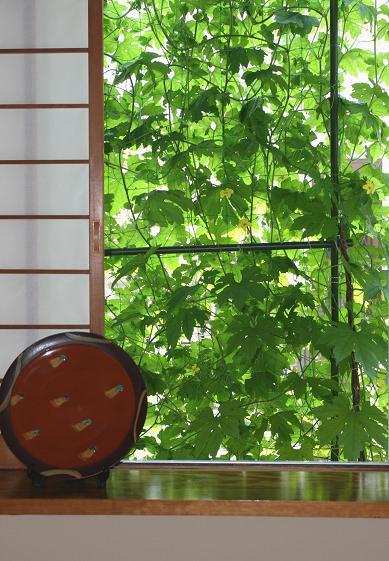 緑のカーテン(ゴーヤ)_d0150720_616247.jpg