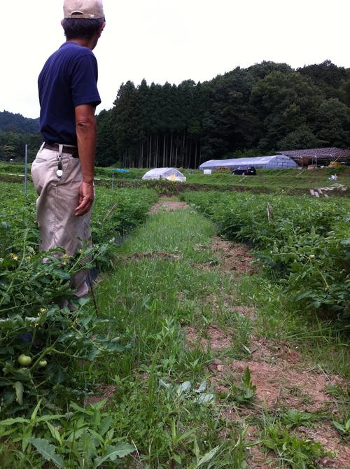 トマト畑のマルチ張りとアンズ穫り_c0167329_19522716.jpg
