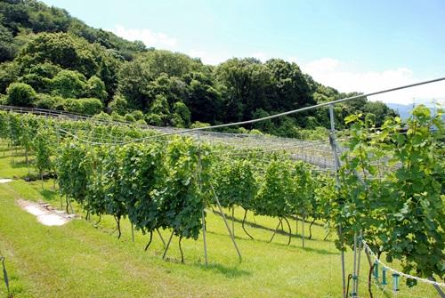 【1】ワインツーリズム大阪2011、行ってきました!~飛鳥ワイン~_b0206537_19571870.jpg