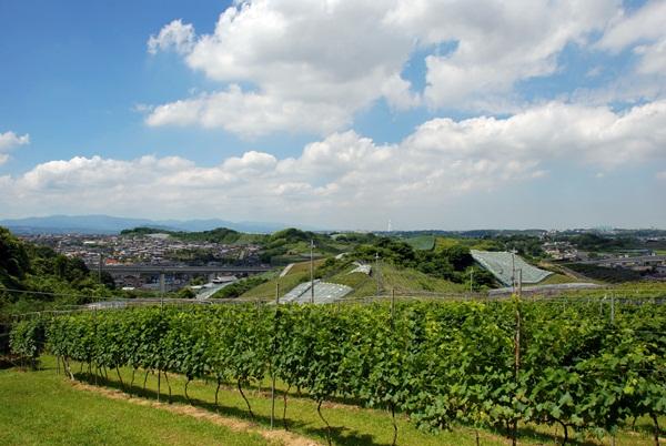 【1】ワインツーリズム大阪2011、行ってきました!~飛鳥ワイン~_b0206537_19574561.jpg