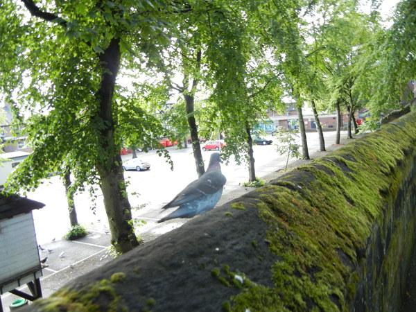 7月13日(水)イギリス旅行⑥チェスタ~コンフイ城~チェスター_f0060461_11364320.jpg