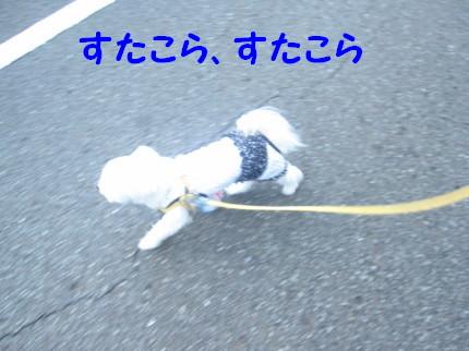 b0193480_20223695.jpg