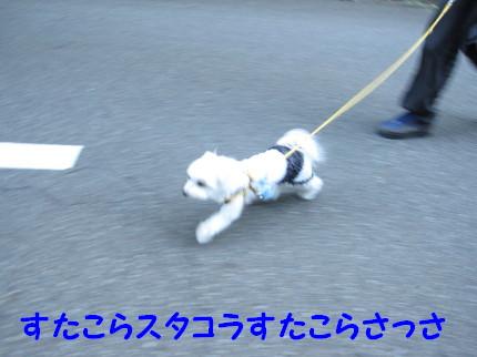 b0193480_20235721.jpg