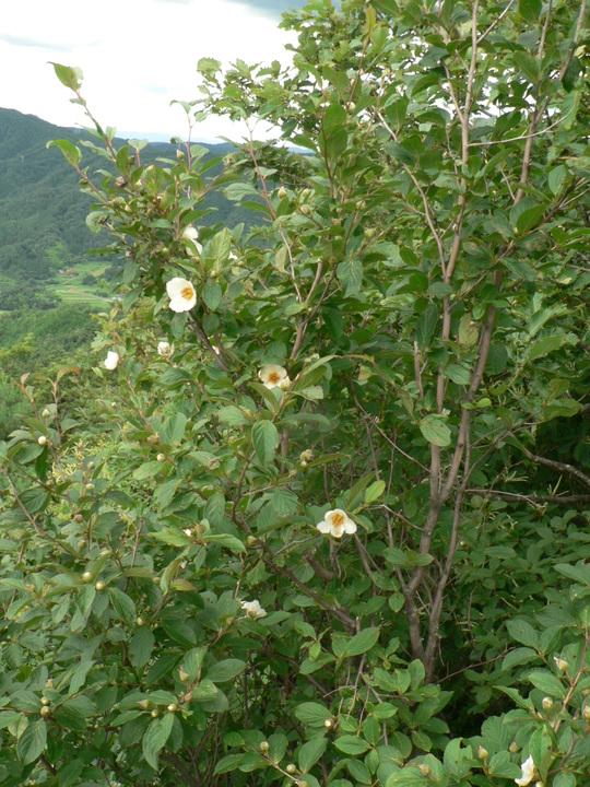 玉峰山(820m)_f0219710_13215696.jpg