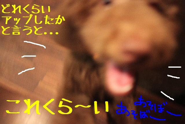 b0130018_9383687.jpg