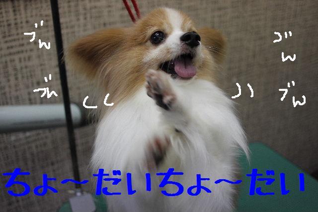 b0130018_9451147.jpg