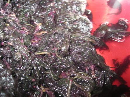 「赤紫蘇の 塩もみ」~~_a0125419_1727353.jpg