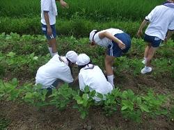 服間小学校の子供たちと草取り_e0061225_9292986.jpg