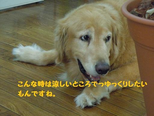 f0114128_2033172.jpg