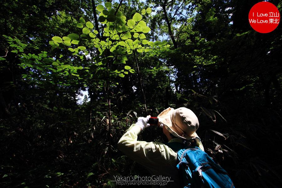 立山カントリーウォーク「森を感じる1日~大人の休日編」03 美女平散策編_b0157849_12583983.jpg