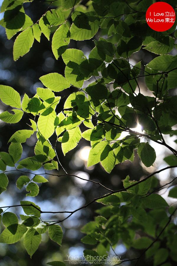 立山カントリーウォーク「森を感じる1日~大人の休日編」05 美女平にてマクロな時間。_b0157849_1321896.jpg