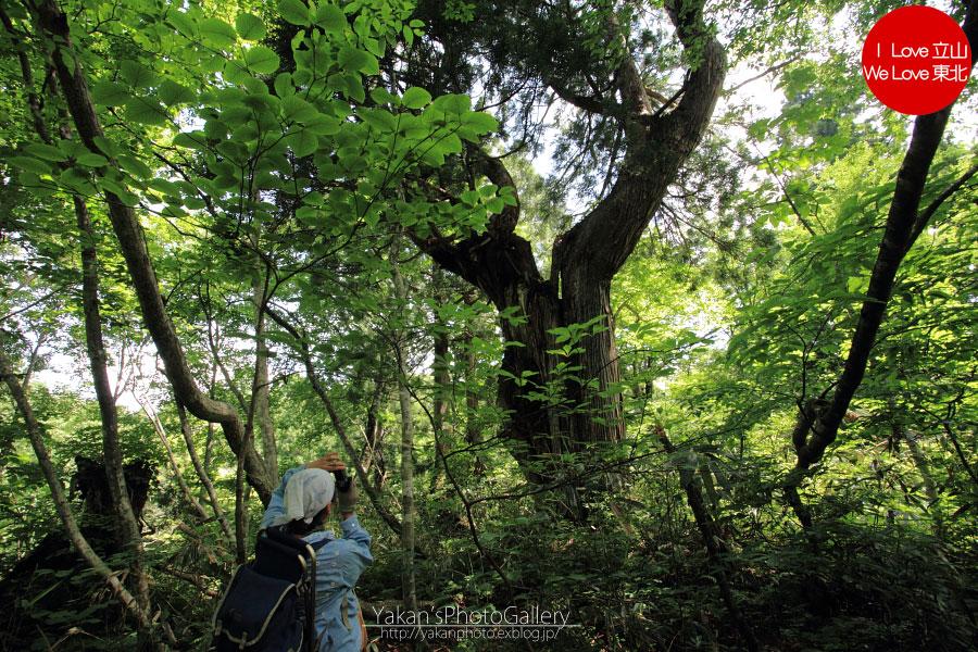 立山カントリーウォーク「森を感じる1日~大人の休日編」03 美女平散策編_b0157849_133072.jpg
