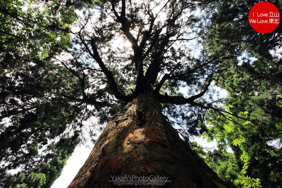立山カントリーウォーク「森を感じる1日~大人の休日編」04 美女平の立山杉を前に休憩編_b0157849_13564413.jpg