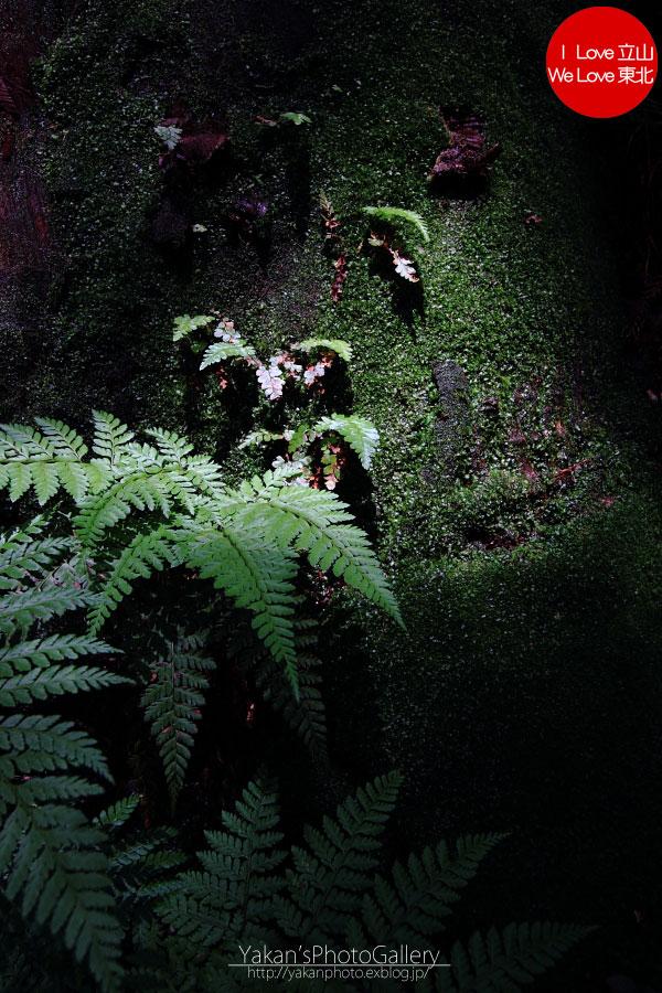 立山カントリーウォーク「森を感じる1日~大人の休日編」04 美女平の立山杉を前に休憩編_b0157849_13572668.jpg
