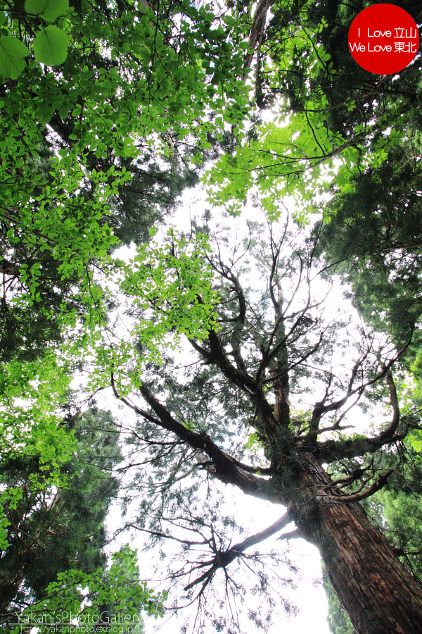立山カントリーウォーク「森を感じる1日~大人の休日編」04 美女平の立山杉を前に休憩編_b0157849_13573618.jpg