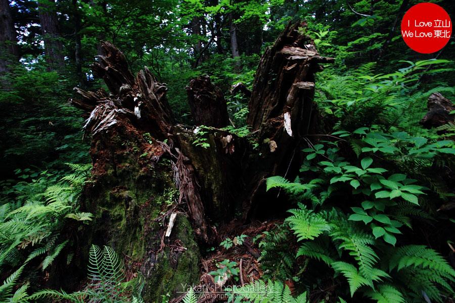 立山カントリーウォーク「森を感じる1日~大人の休日編」08 黄泉の国編_b0157849_14153621.jpg