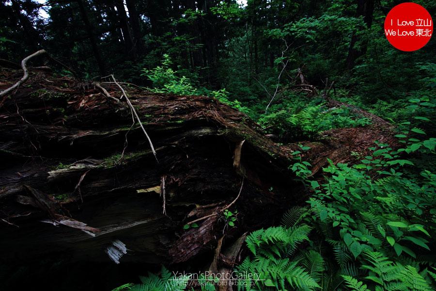 立山カントリーウォーク「森を感じる1日~大人の休日編」08 黄泉の国編_b0157849_14154873.jpg