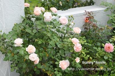 c0178855_23145035.jpg