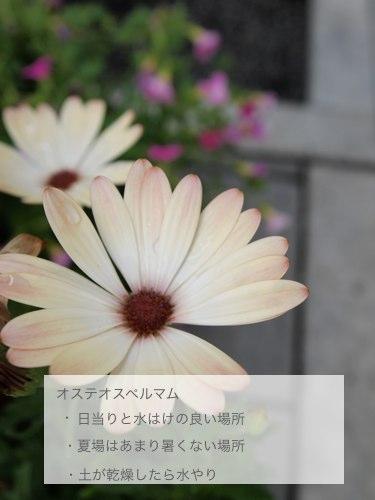 d0160959_16285720.jpg