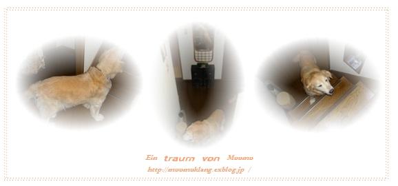 e0185787_163486.jpg