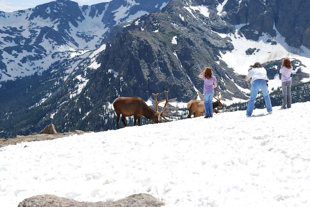 Rocky Mountain National park_b0121501_321587.jpg